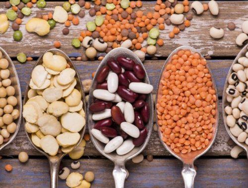 Aliments protéines végétales