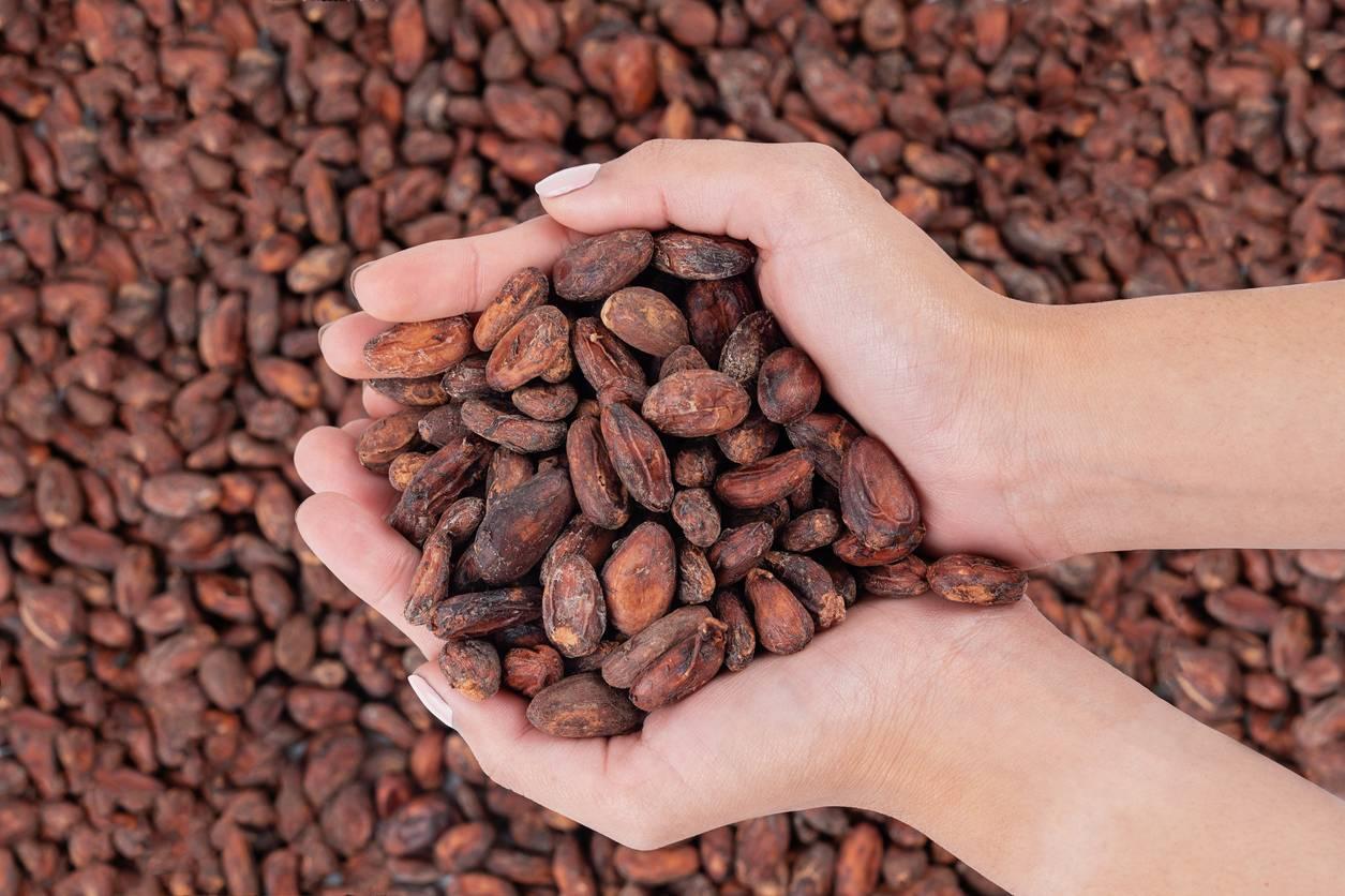 Des fèves de cacao dans une main